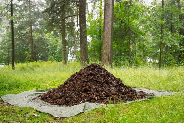 Erno-Erik Raitanen: Kuoleman puutarha saatanan kesänäyttelyssä